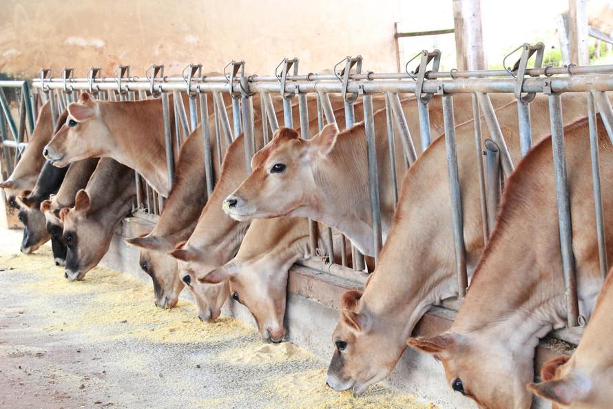Iapar pesquisa identificação de bovinos com inteligência artificial