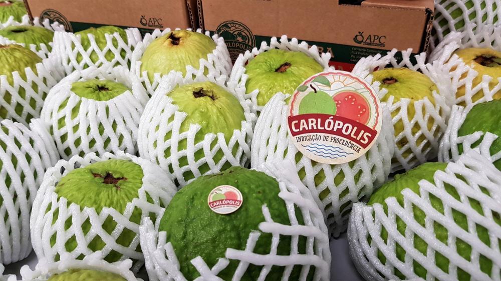 A primeira exportação será de 560 quilos do fruto, que deverá chegar na próxima semana na Europa - Divulgação