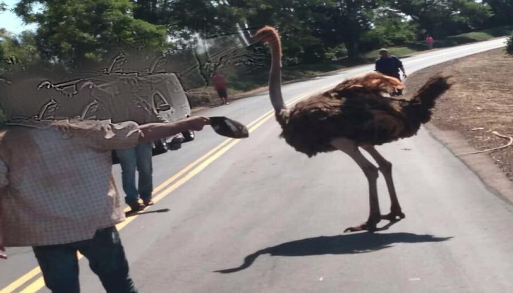 Pessoas desceram dos carros para tirar o animal da pista. — Foto: Cleverson Rodrigues/Rádio Cabiúna