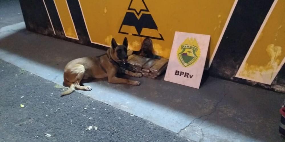 Cão da PRE encontra mais uma carga de maconha em bagageiro de ônibus