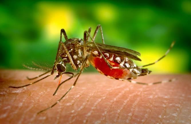 Celular é usado no combate ao mosquito da dengue por estudantes no Paraná