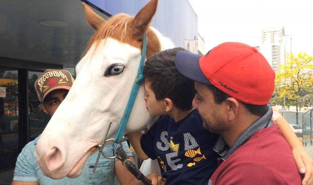 Yuri Maia, 7 anos, tem paixão por cavalos desde os 3 anos. Ele está internado e recebeu a visita da égua Lady Bela — Foto: Glauco Araújo/G1