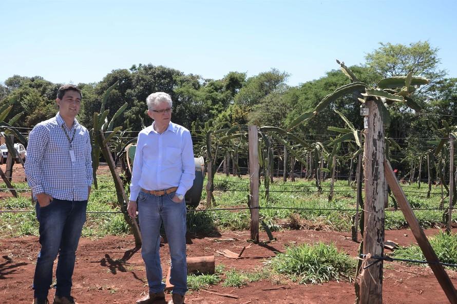 Renda que será gerada no campo está estimada em R$ 3,2 milhões por ano agrícola - AEN