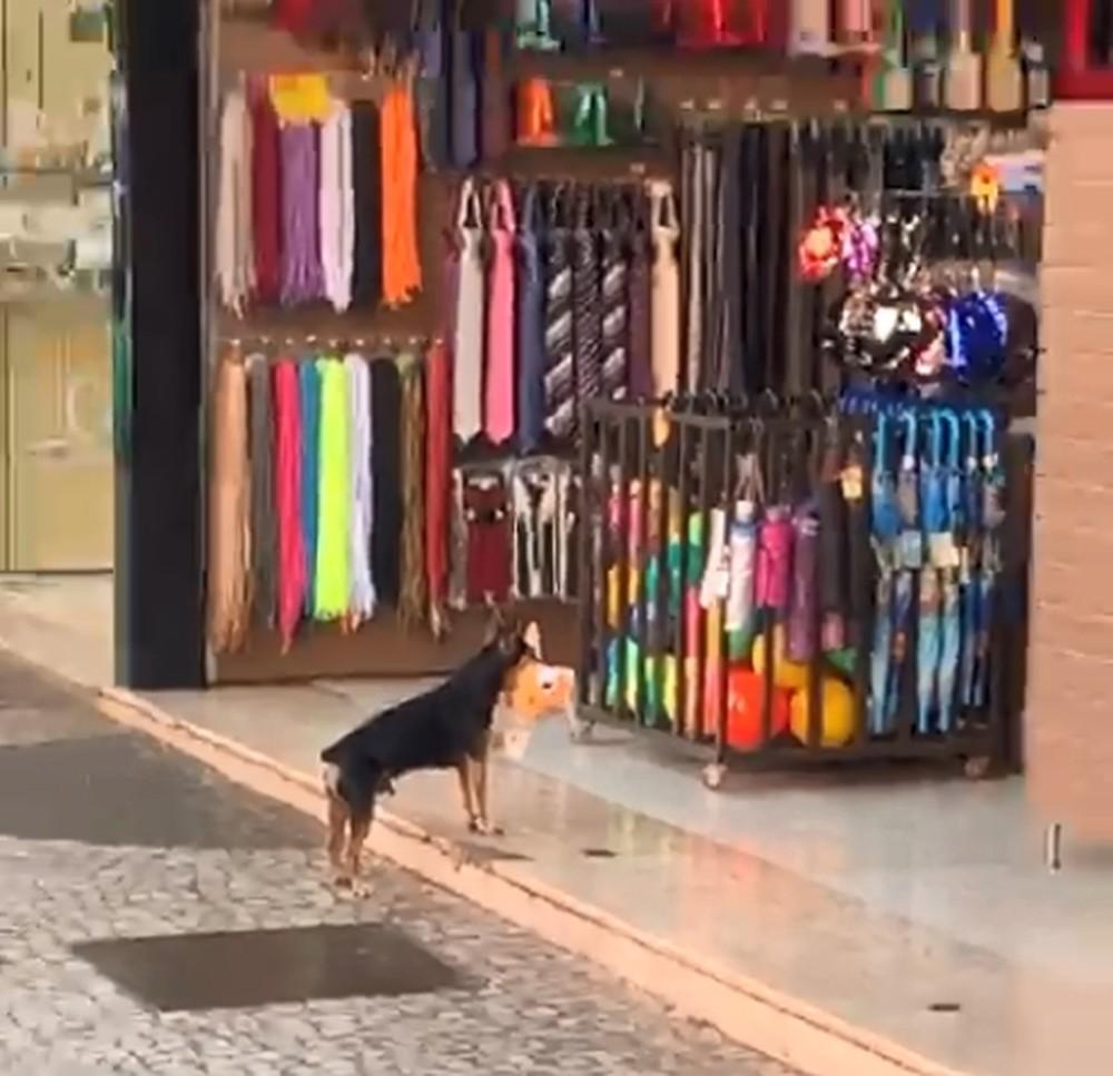 Cachorro foi flagrado 'furtando' brinquedo de pelúcia de loja em Votuporanga — Foto: Arquivo Pessoal/Hiago Gonçalves