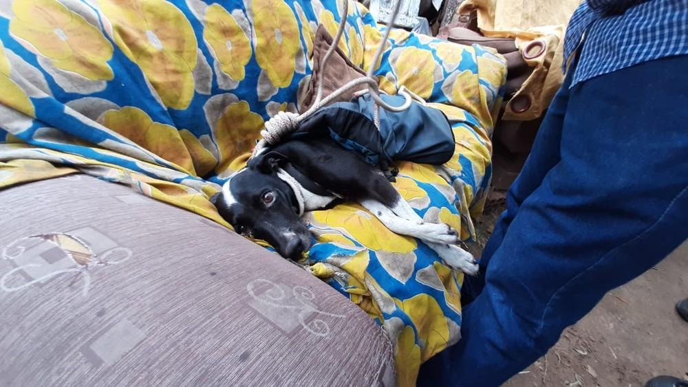 Cachorra é resgatada com vida quase um mês depois de cair em precipício em Marília — Foto: Fabrício Lopes/TV TEM
