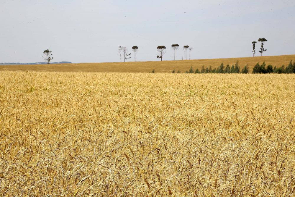 O maior crescimento no comparativo com o mesmo período de 2018 foi no setor agropecuário, com alta de 10% - AEN