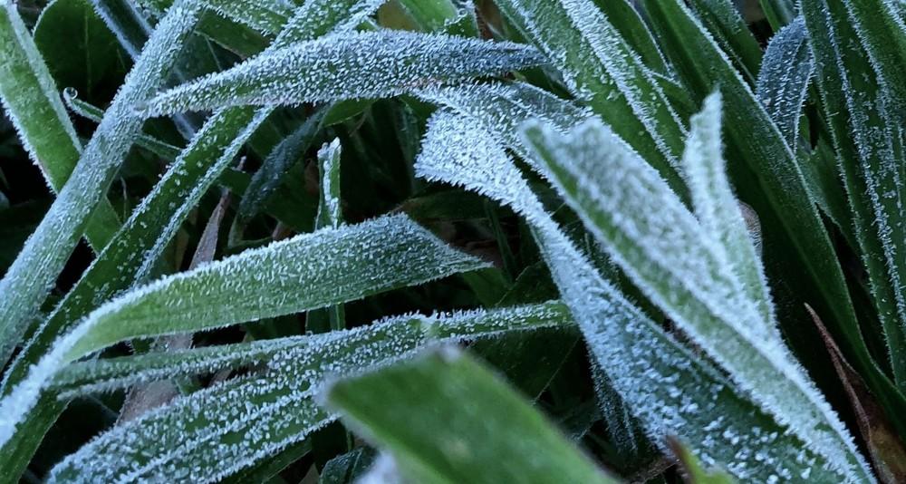Vegetação com camada de gelo em São Joaquim, SC — Foto: Mycchel Legnaghi/São Joaquim Online